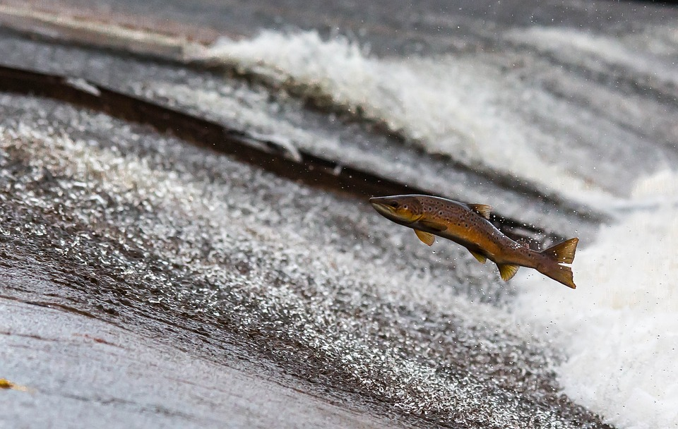 Researchers find storm water runoff damages fish more than expected
