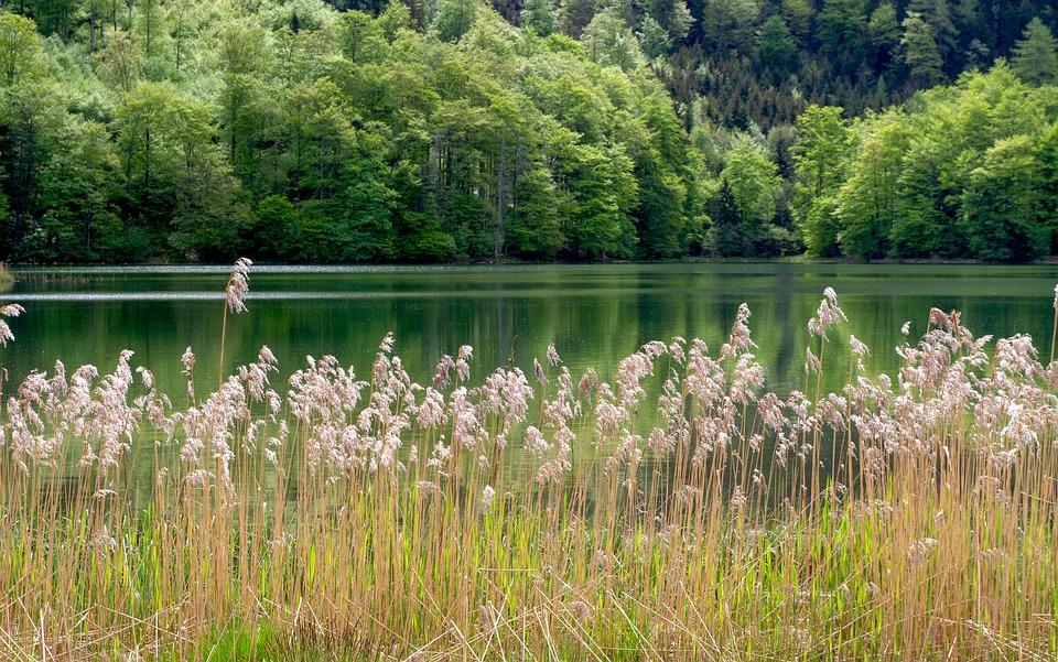 New study investigates storm water detention ponds