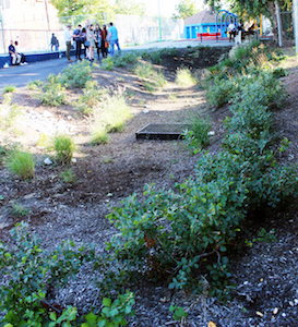 Rain gardens are among the green infrastructure used to capture runoff.