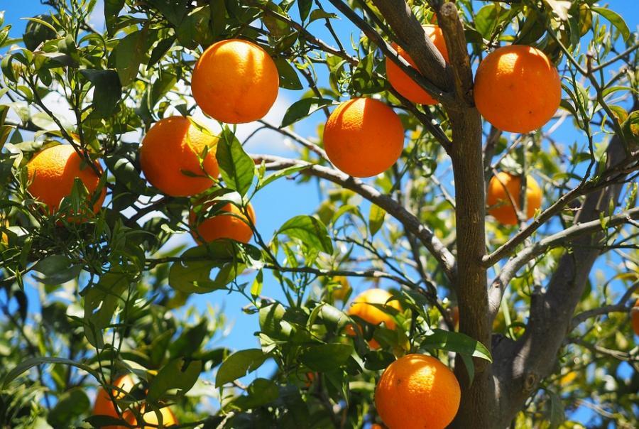 Citrus farm turns into storm water reservoir