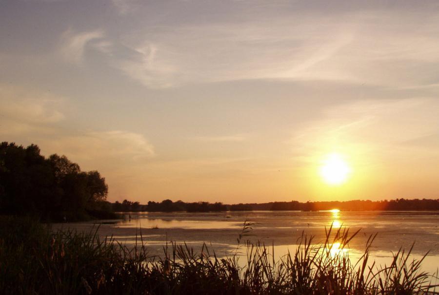 wetlands, floating, engineered, research, saint francis, university, oklahoma