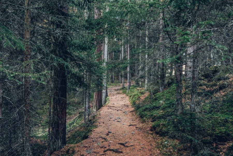 wildlife habitats, restoration, trails, funding, grants, santa clara valley