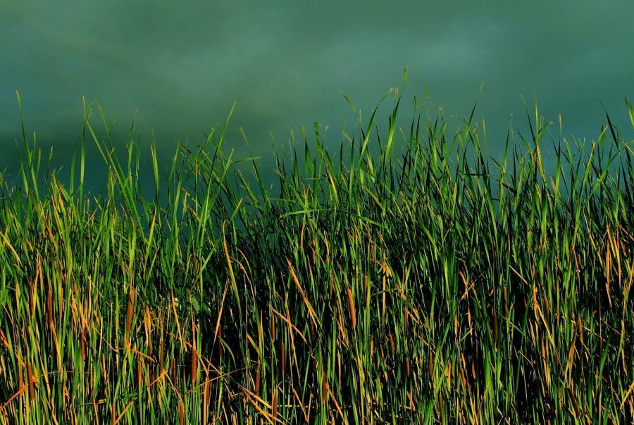 Floating wetlands used in Springfield, Mo.