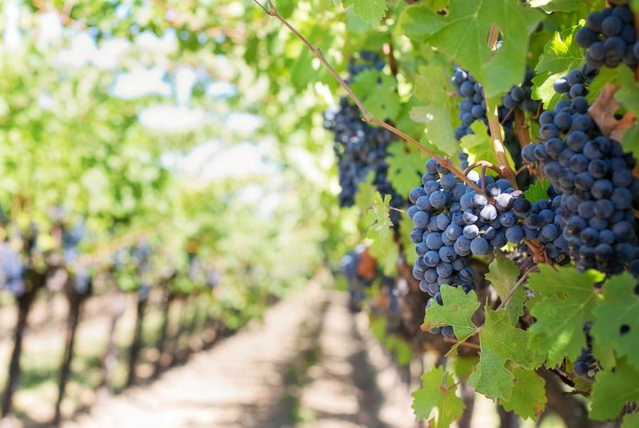Napa and Sonoma valley vineyards require erosion control