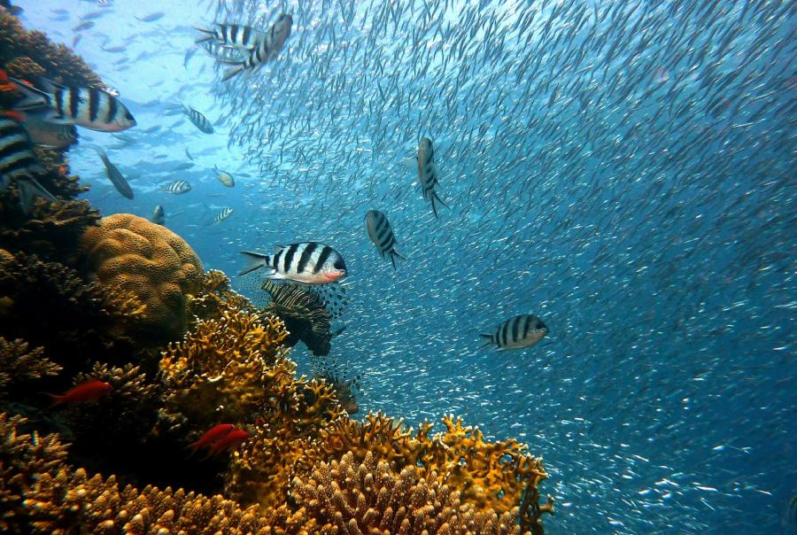 New study finds agricultural runoff led to increase in coral reef pollution in recent years
