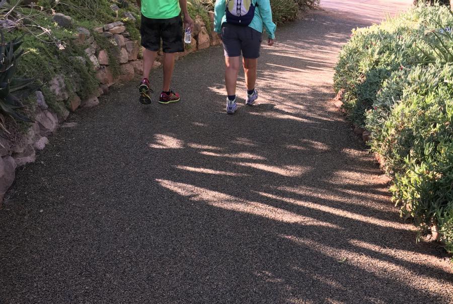 porous, pavement, permeable, trail, arboretum, Arizona, nature, exhibit
