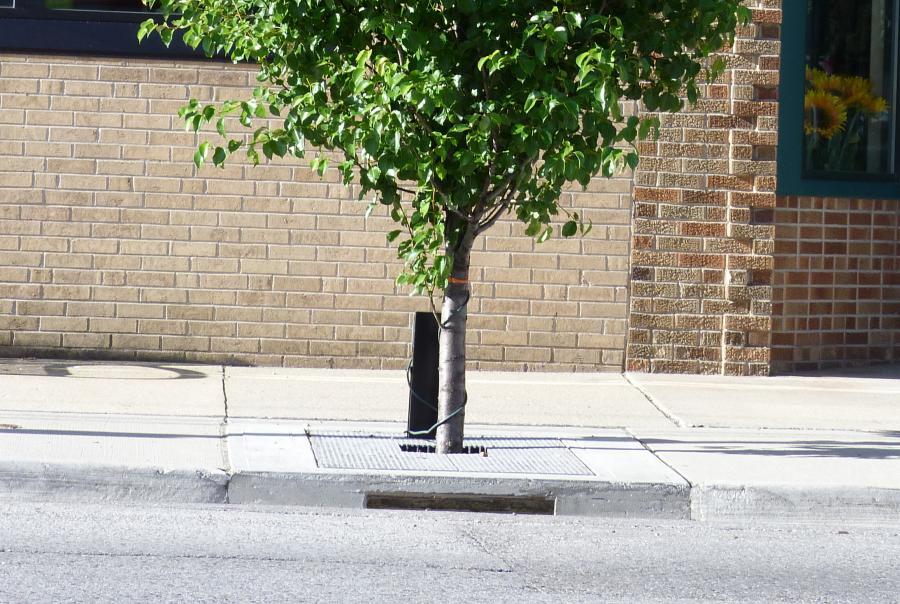 A storm tree filtration system in Big Rapids, Michigan