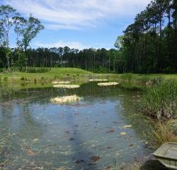 Floating Island Wetlands Reduce Coliform Levels in Creek